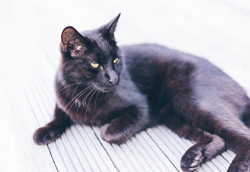 adorable-animal-black-cat-stock-pet-881142